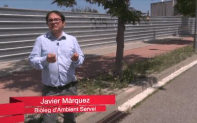 Reportatge a la TV de Vilafranca