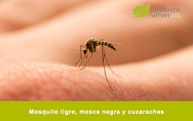Mosquito tigre, mosca negra y cucarachas