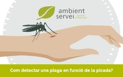 Com detectar una plaga en funció de la picada?