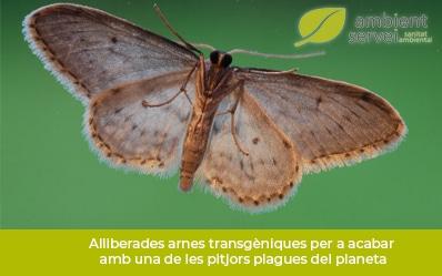 Liberadas polillas transgénicas para acabar con una de las peores plagas del planeta