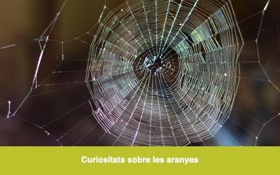 Curiositats sobre les aranyes