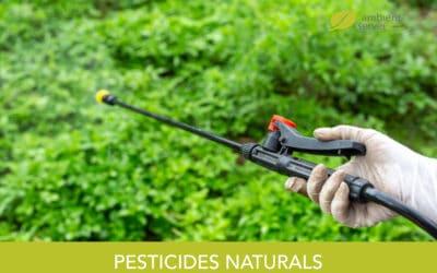 Pesticides naturals