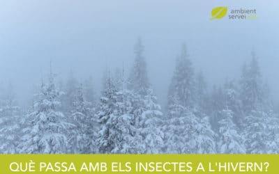 Què passa amb els insectes a l'hivern?