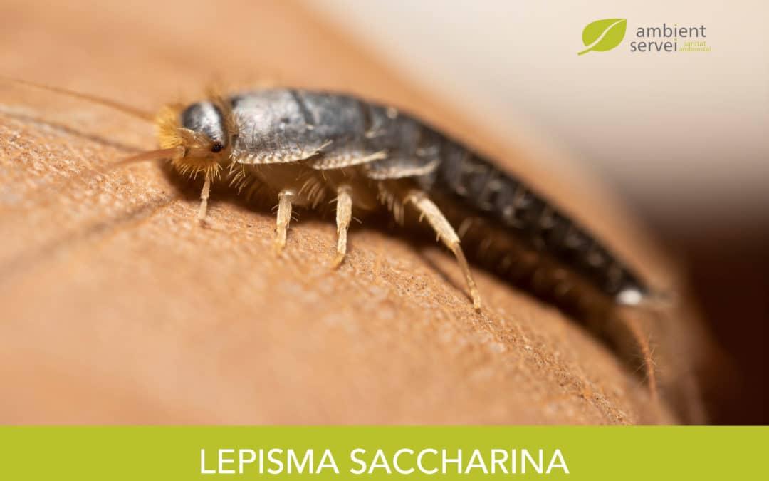 Lepisma