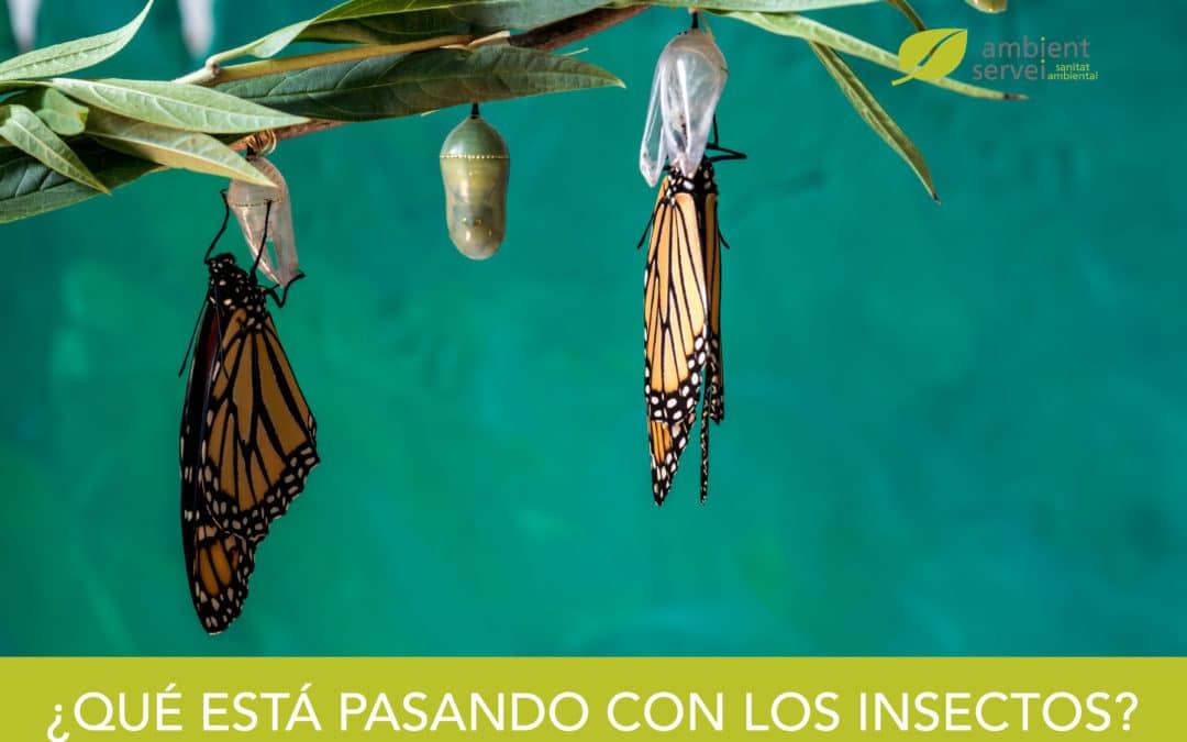 ¿Qué está pasando con los insectos?