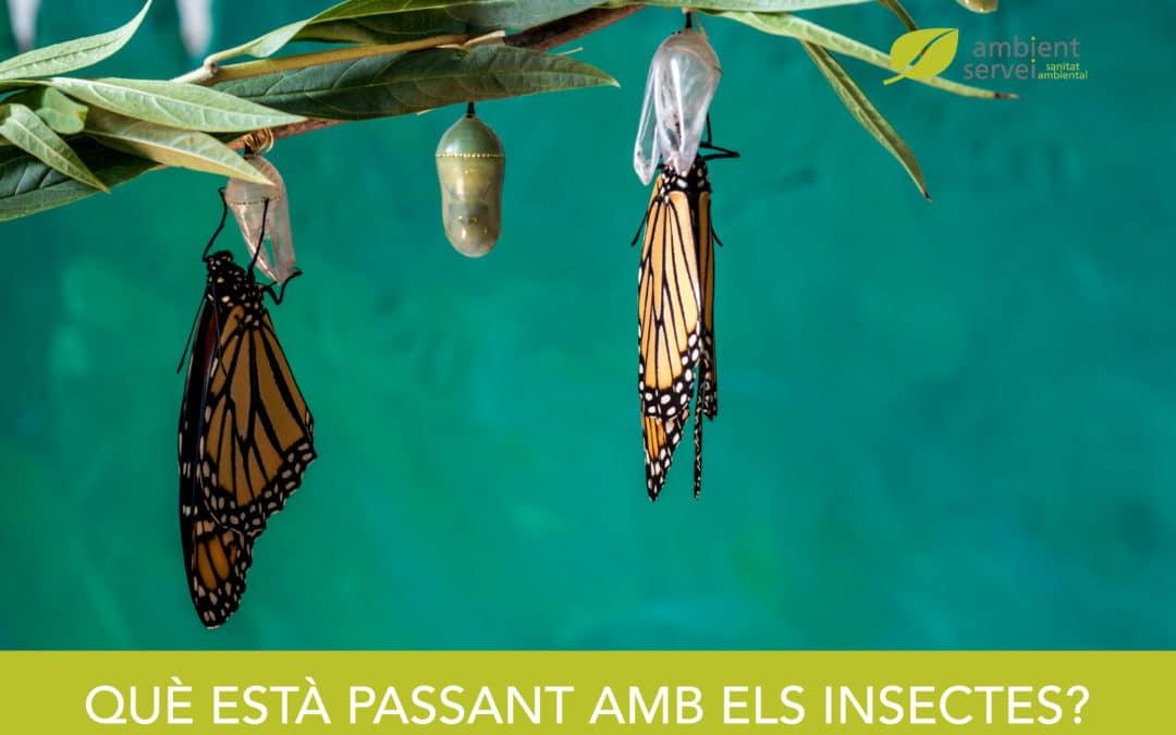 Què està passant amb els insectes?