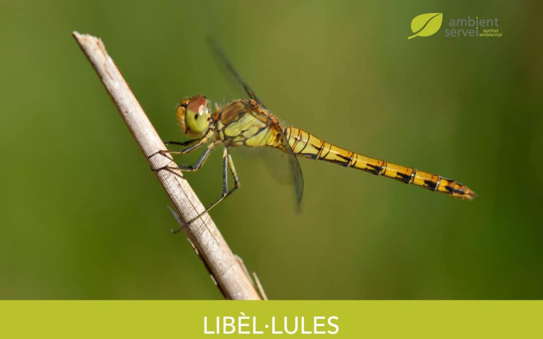 Libèl·lules